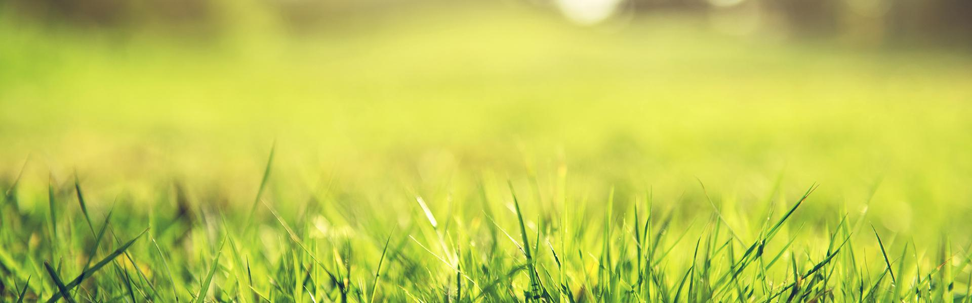 A picture of green grass.