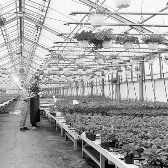 In Sunny Industrial Greenhouse Agricultural Engineer and Gardener Inspect Flowers and Plants and Analyze Data with Tablet Computer. Rows of Rare and Commercially Viable Plants are Visible.